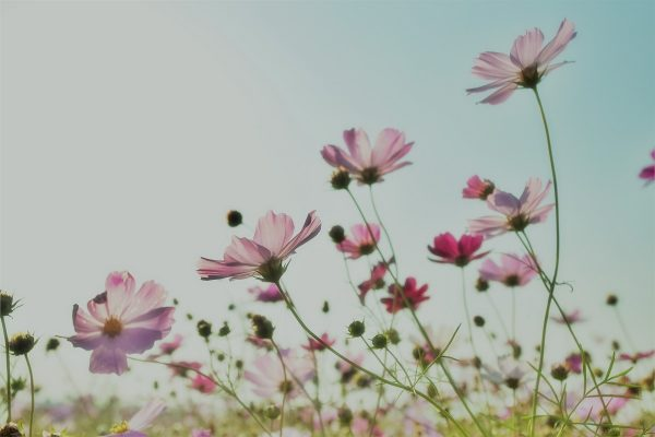 blooming | pure photography
