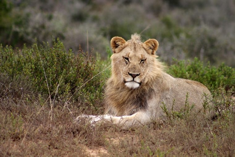on safari | pure photography all images copyrighted