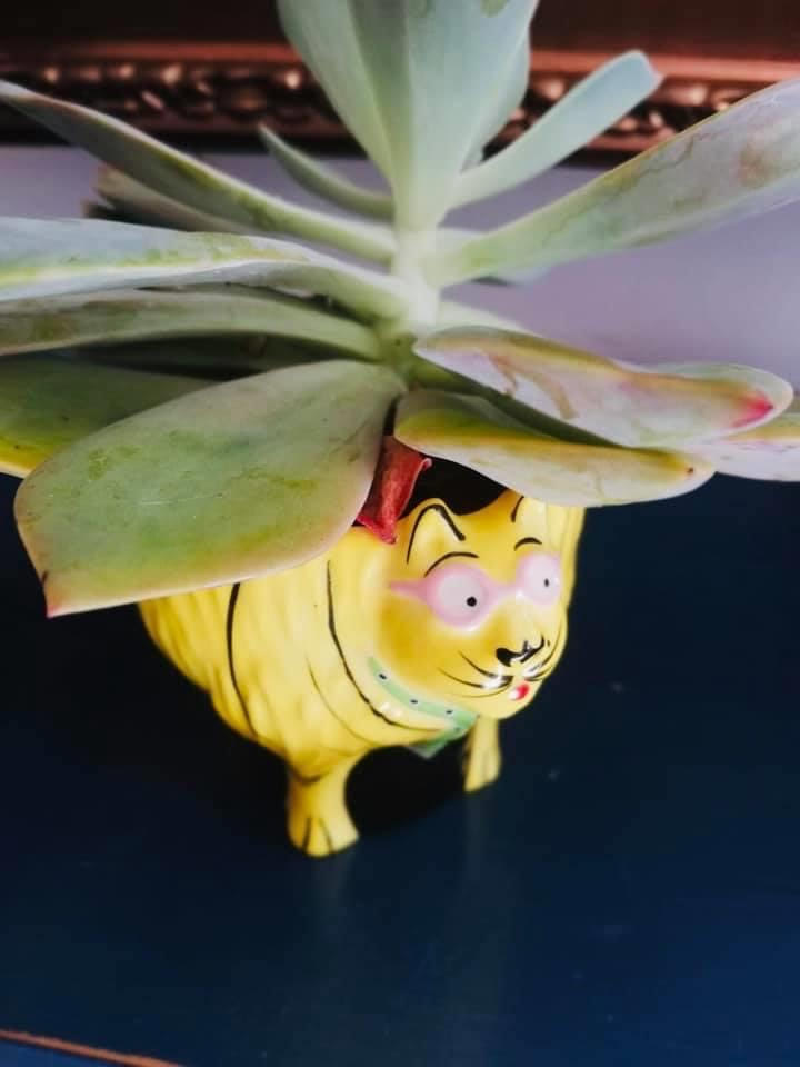 Yellow ceramic cup with Succulent Copyrighted Pure Photography