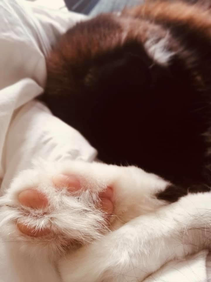 Paws Copyright Pure Photography